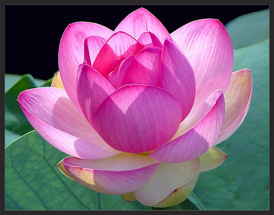 """""""All it takes is one bloom of hope to make a spiritual garden."""" -Terri Guillemets"""